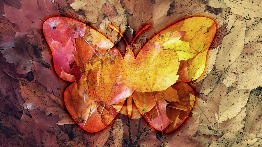 Autumn Butterfly by Jason Fink
