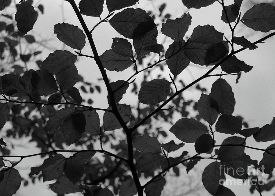 Autumn Canopy bw Donegal by Eddie Barron