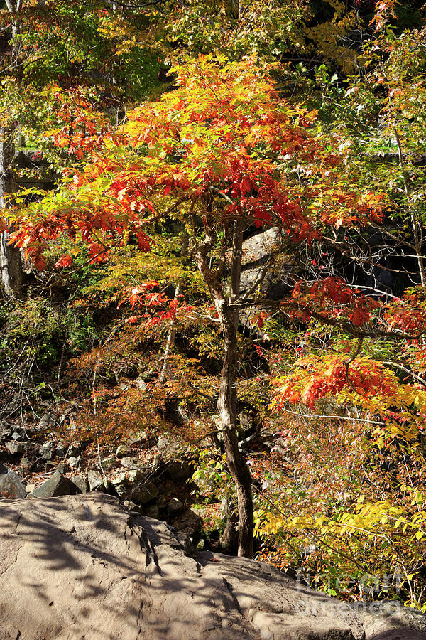 Oak Photograph - Autumn Color In Smoky Mountains National Park by Louise Heusinkveld