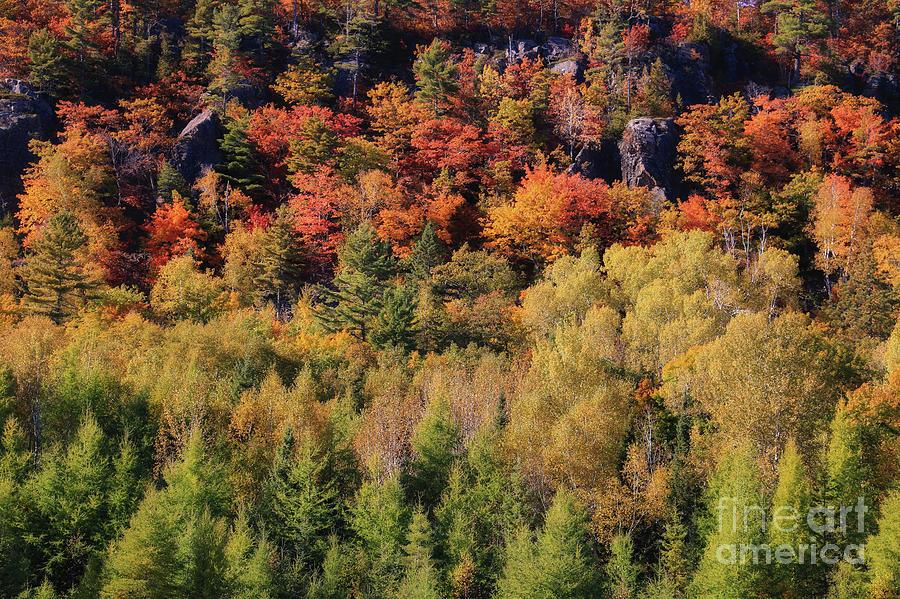 Autumn Color on Cliff Drive by Rachel Cohen
