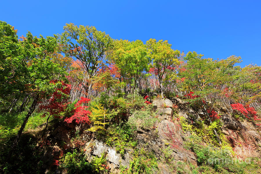 Newfound Gap Road Photograph - Autumn Color On Newfound Gap Road In Smoky Mountains National Park by Louise Heusinkveld