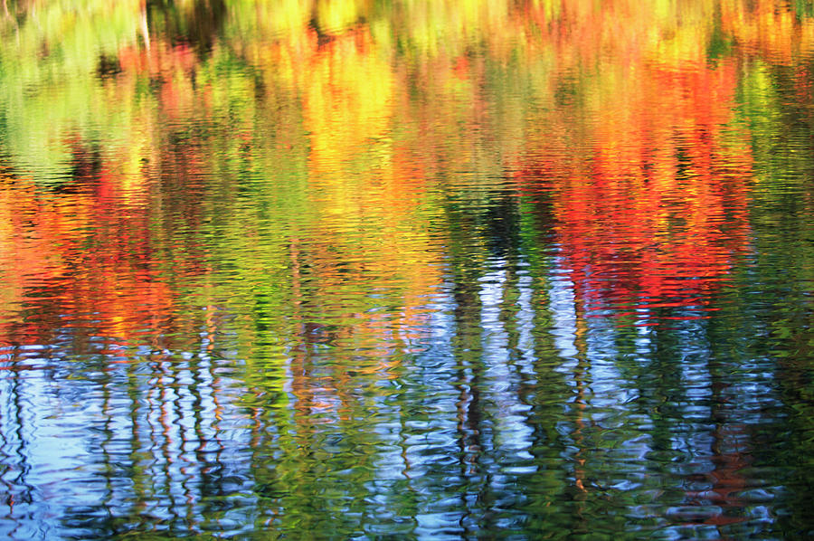 Autumn Color Reflection Photograph by Ooyoo