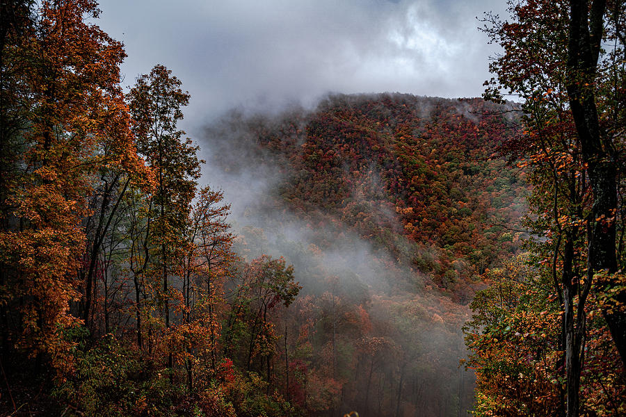 Autumn colors and Fog by Kelly Kennon