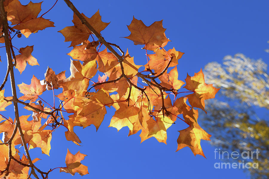Autumn Colors - Breathe #1 by Gem S Visionary