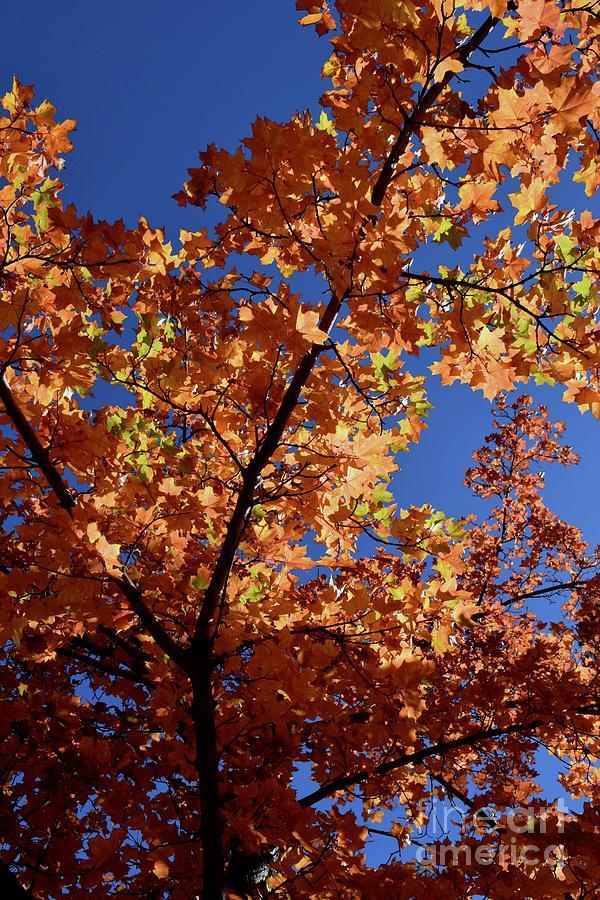 Autumn Tree - Foliage #6 by Gem S Visionary