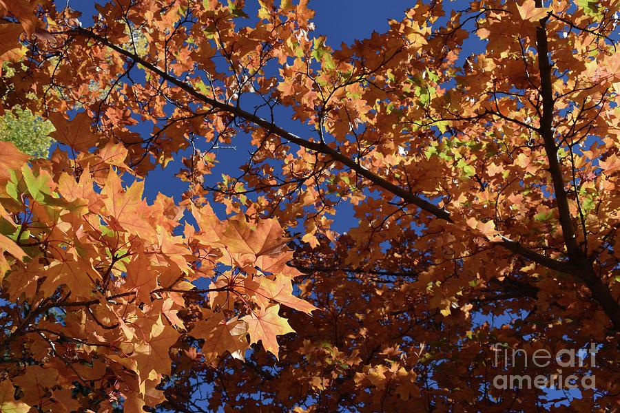 Autumn Photograph - Autumn Tree - Foliage #3 by Gem S Visionary