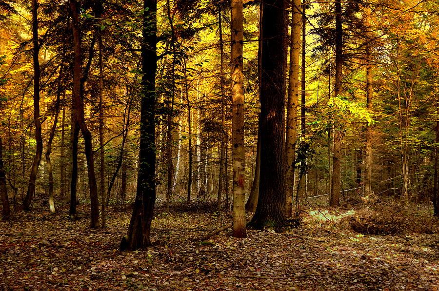 Autumn colors by Henryk Gorecki