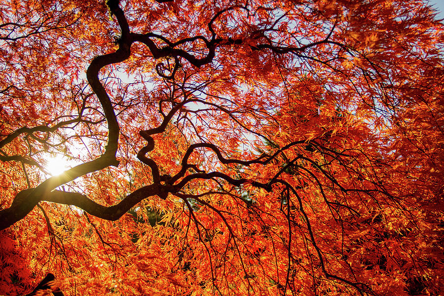 Autumn colors in Japanese Garden by Kunal Mehra