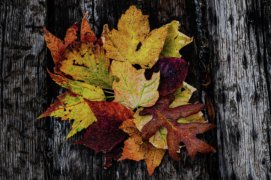 Autumn Colors by Kelly Kennon