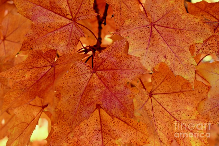 Autumn Leaves #4 by Gem S Visionary