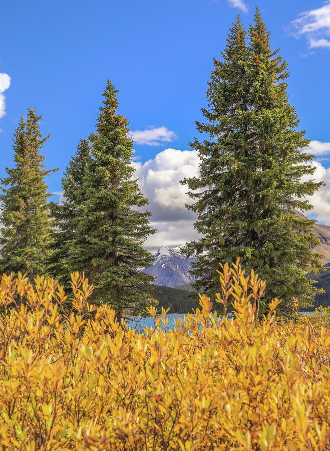 Autumn Colors On Bow Lake by Dan Sproul