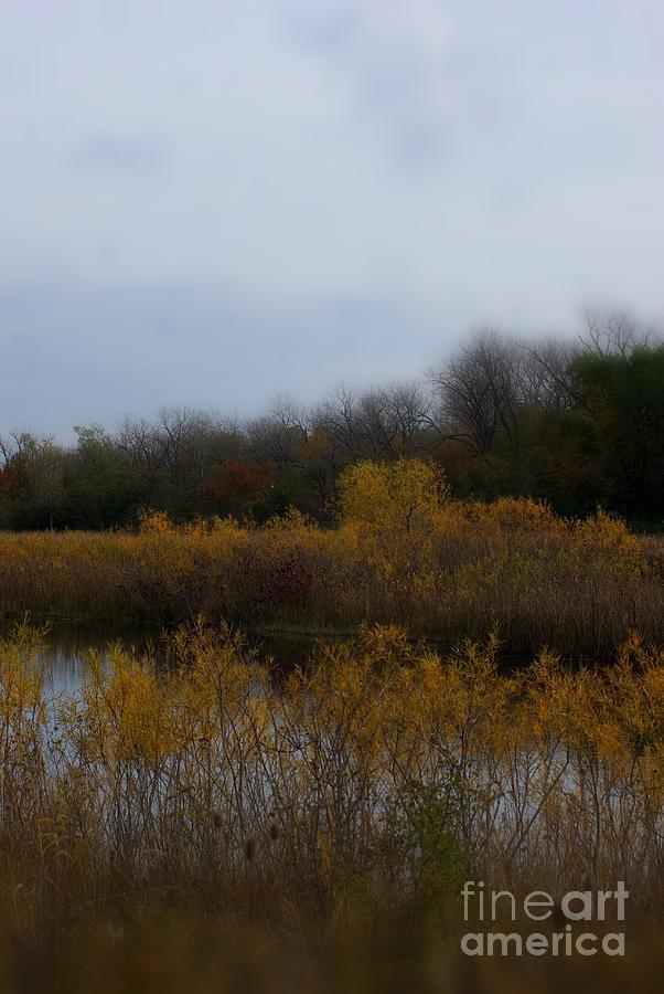Autumn Colors On The Wetlands Photograph