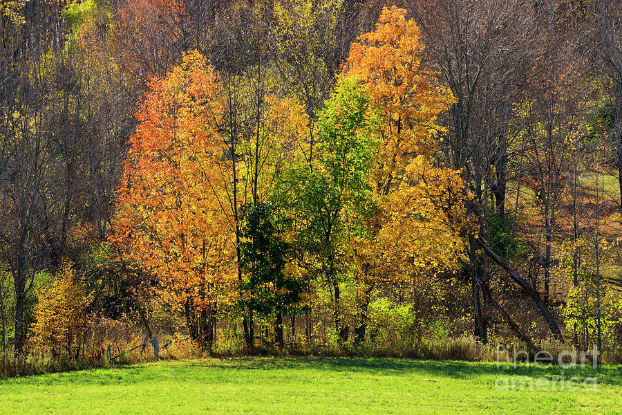Autumn Photograph - Autumn Colour In Southern Ontario by Louise Heusinkveld