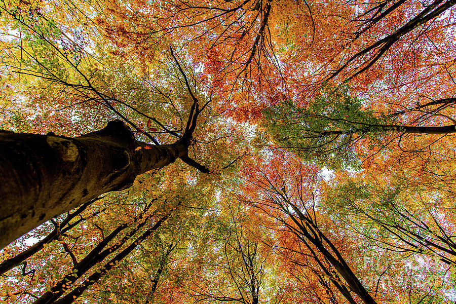 Autumn Colours by Alex Hiemstra
