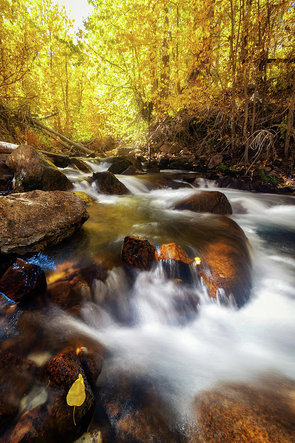 Autumn Creek by Tassanee Angiolillo