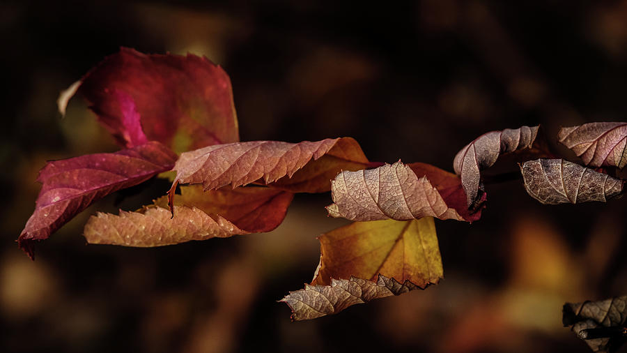 Autumn Curls by Glenn DiPaola
