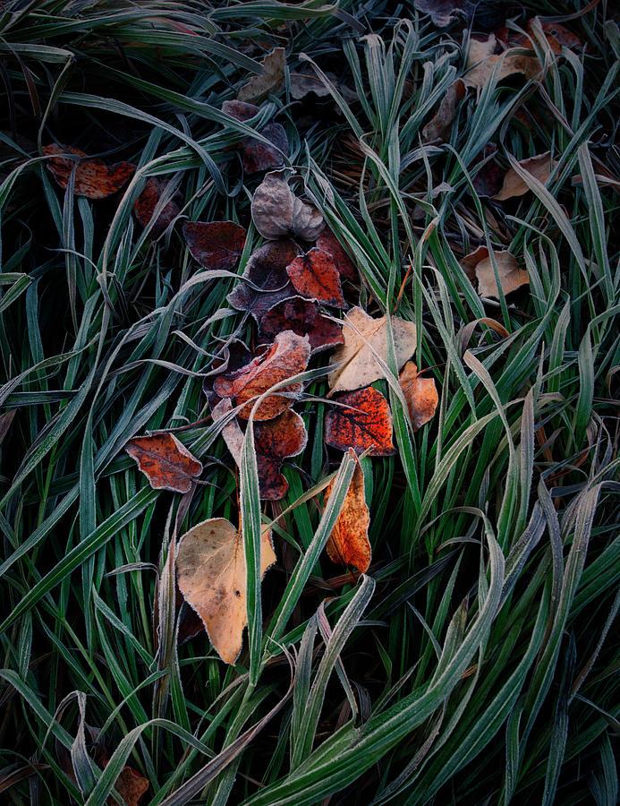 Autumn Detail by Dan Jurak