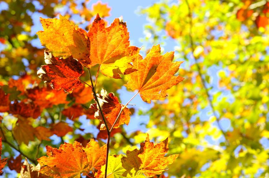 Autumn Display by Tikvah's Hope
