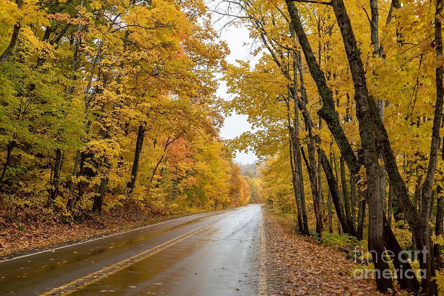 Autumn Drive by Susan Rydberg