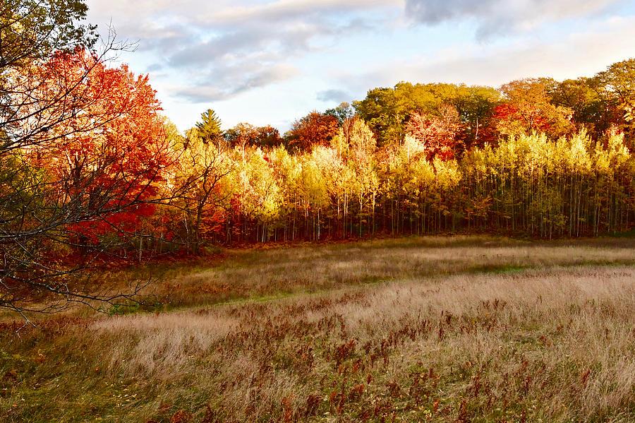 Autumn Evening 0317 by Michael Peychich
