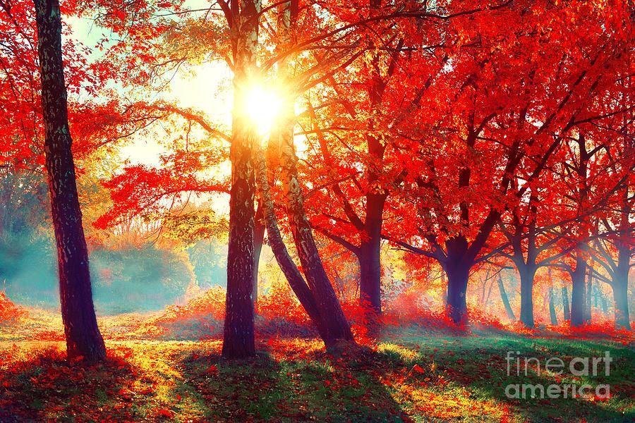Sunrays Photograph - Autumn. Fall Scene. Beautiful Autumnal by Subbotina Anna