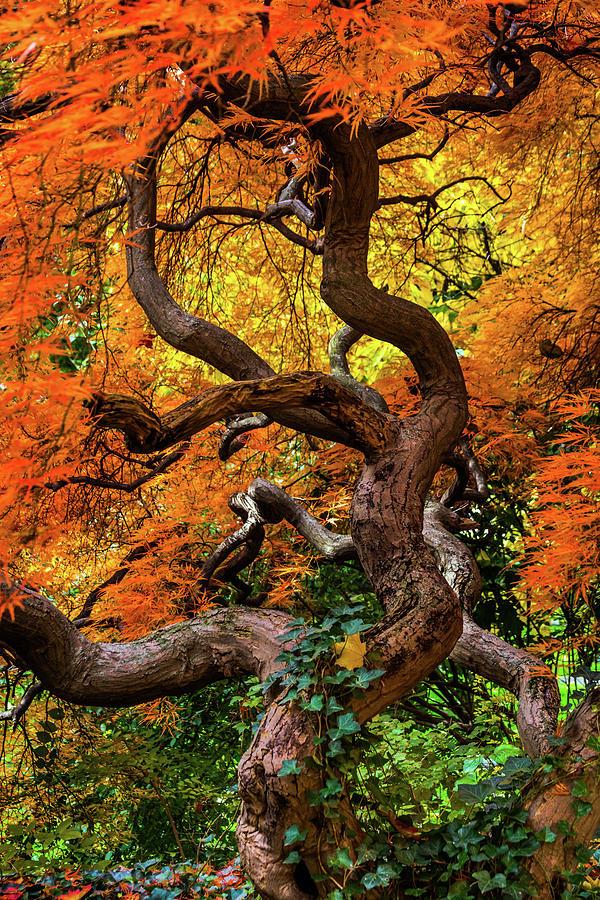 Autumn Fantasy by Stewart Helberg