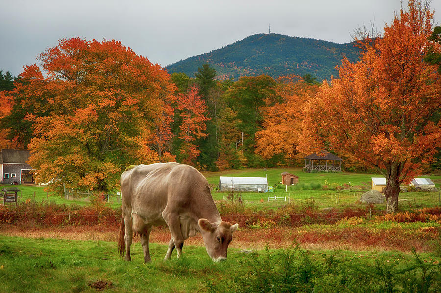Autumn Farm Scene - Tamworth, NH by Joann Vitali