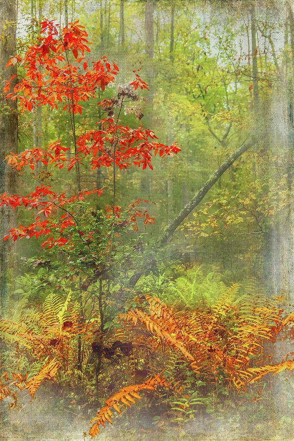 Autumn Ferns and Trees FX by Dan Carmichael