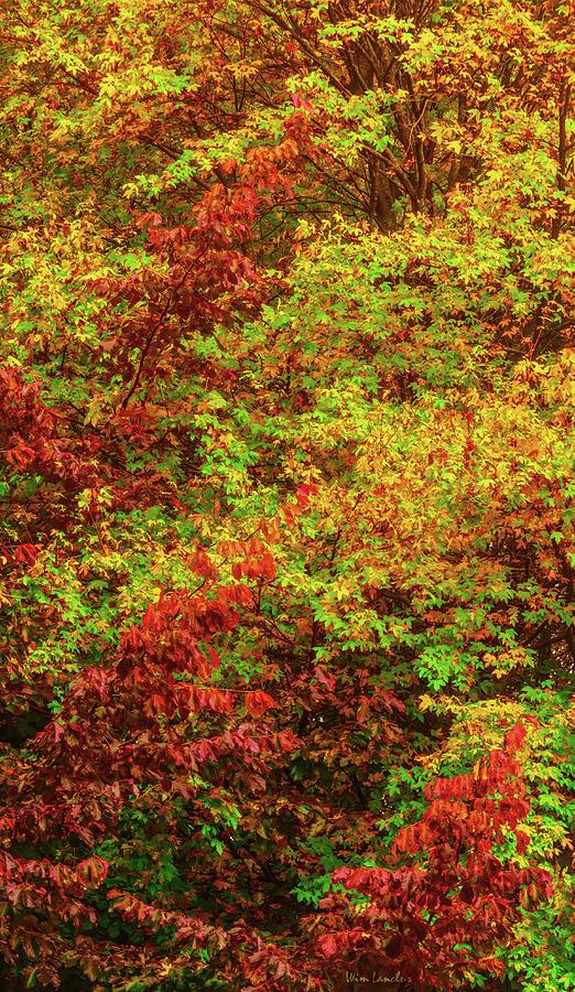Autumn Flames by Wim Lanclus