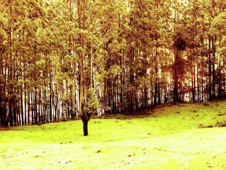 Autumn Flavour Photograph