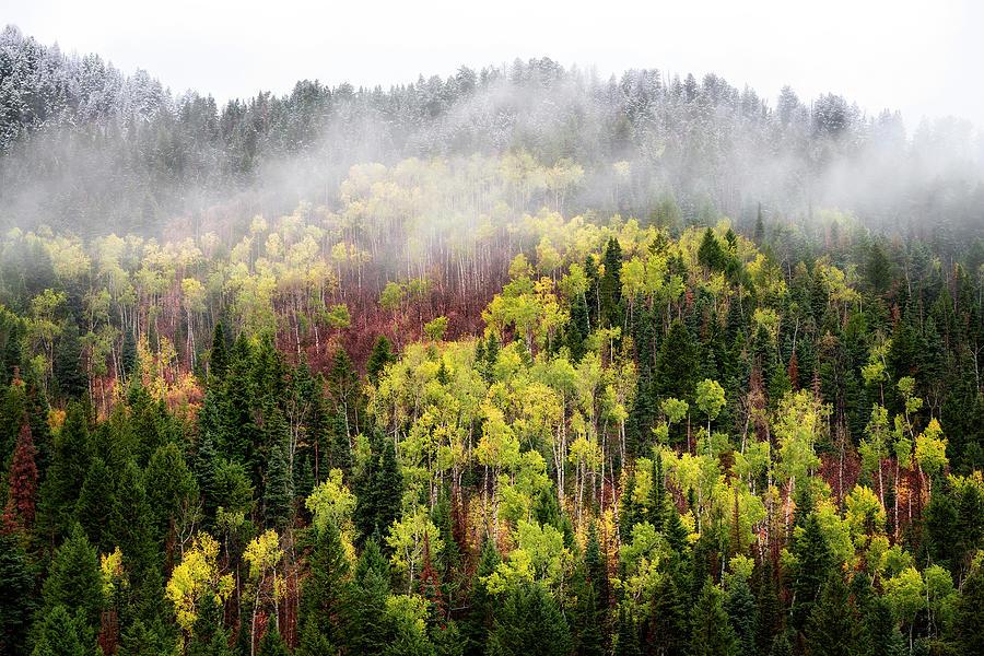 Autumn Fog by Michael Ash