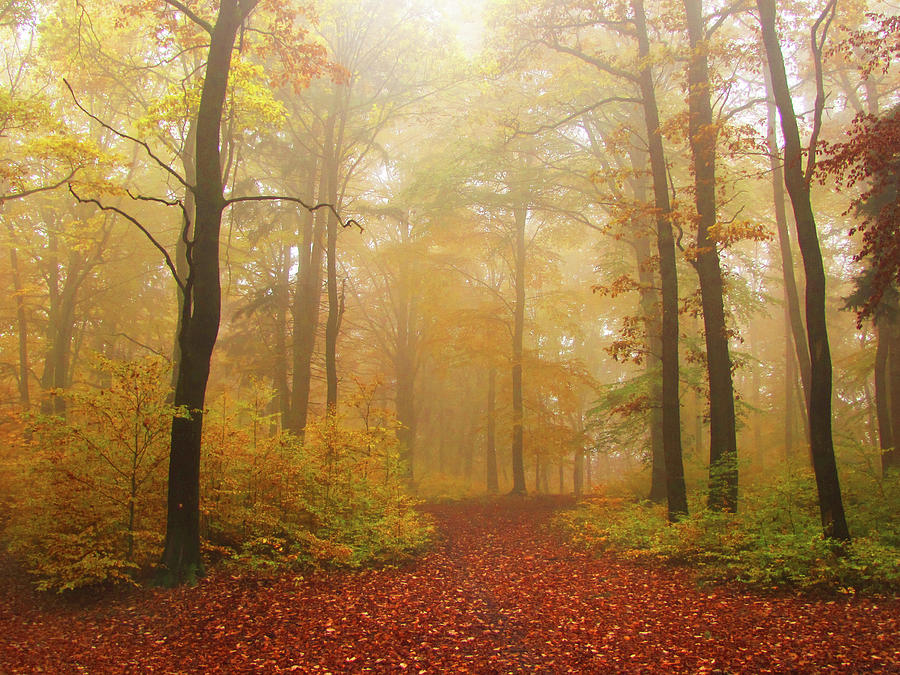 Tranquility Photograph - Autumn Foggy Forest by Tas10