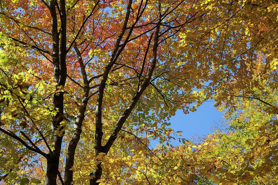 Autumn Foliage I by Cliff Wassmann