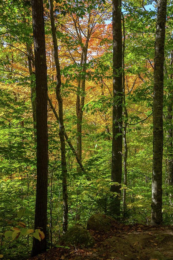 Autumn Foliage II by Cliff Wassmann