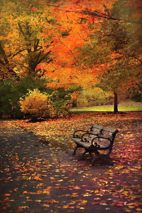 Autumn Foliage in Boston - Olmsted Park by Joann Vitali