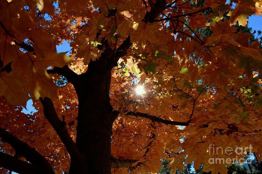 Autumn Tree - Foliage #1 by Gem S Visionary