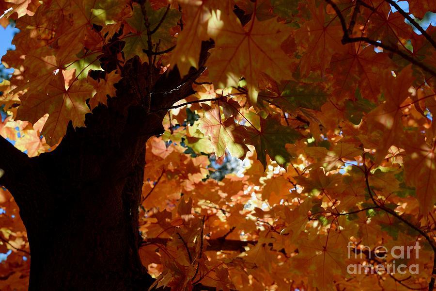 Autumn Tree - Foliage #2 by Gem S Visionary