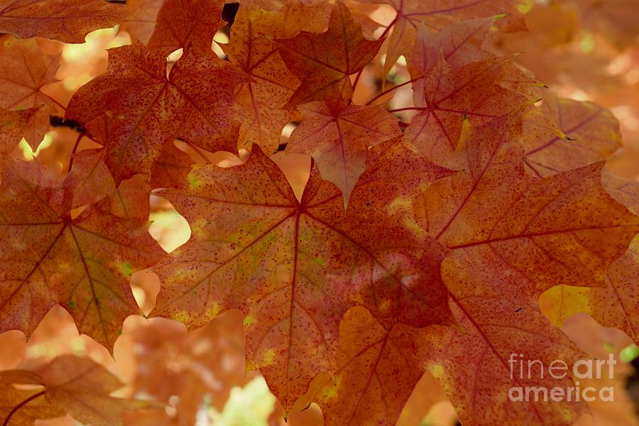 Autumn Leaves #1 by Gem S Visionary