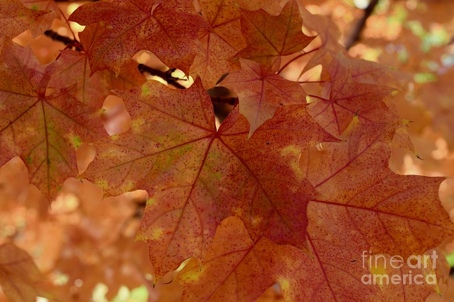 Autumn Leaves #2 by Gem S Visionary