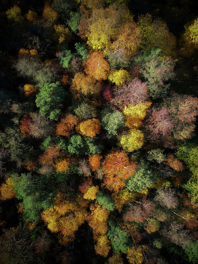 Drone Photograph - Autumn Forest - Aerial Photography by Nicklas Gustafsson