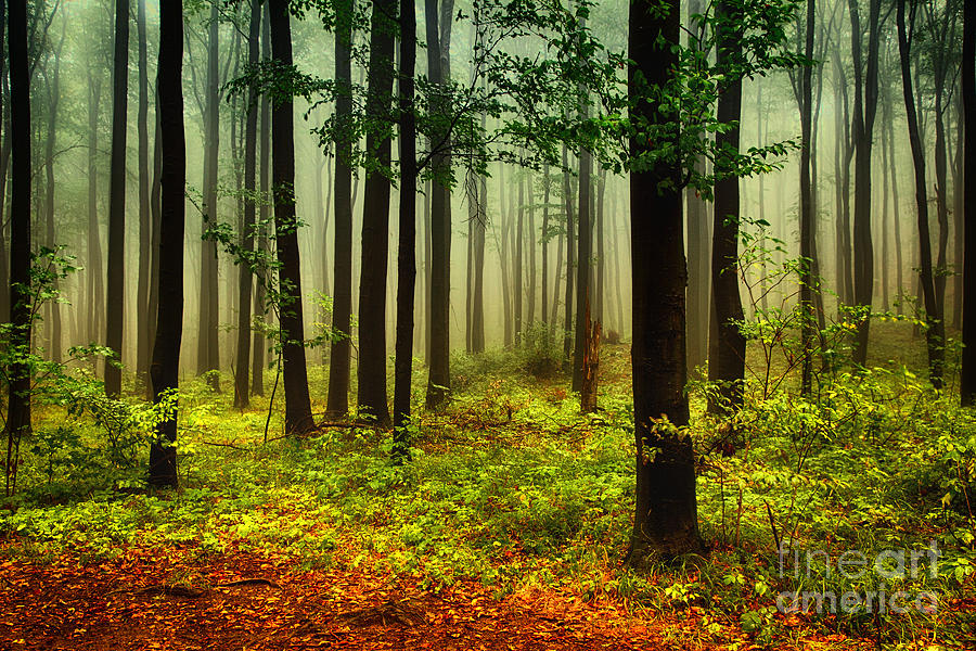 Rain Photograph - Autumn Forest by Attila