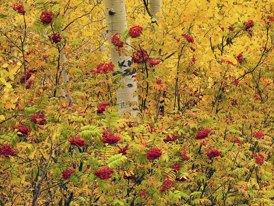 Aspen Forest Photograph - Autumn Forest Colors by Leland D Howard