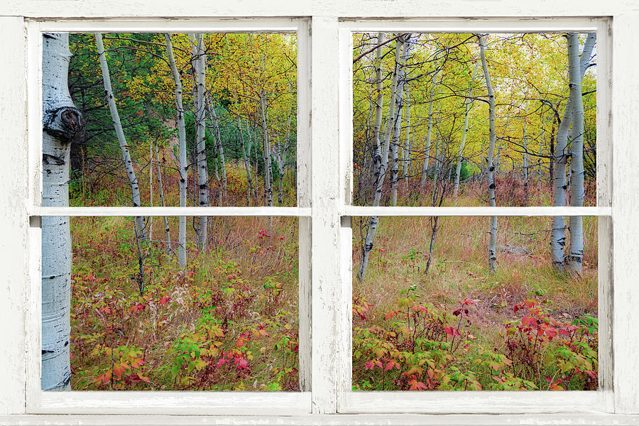Autumn Forest Delight Rustic White Window View by James BO Insogna