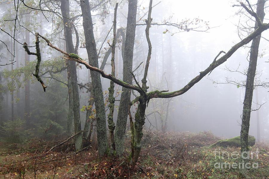 Autumn forest in fog by Michal Boubin