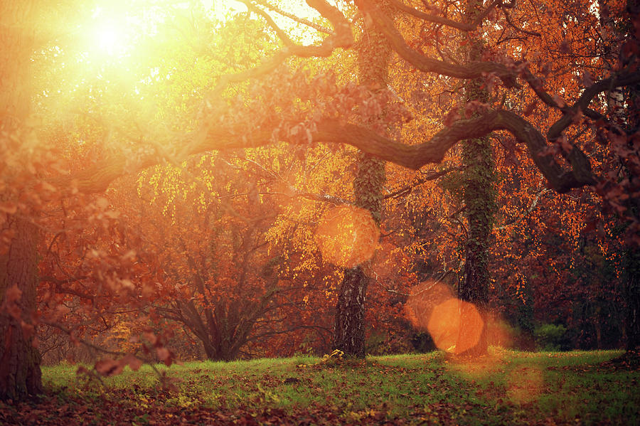 Autumn Forest In Sunlight Photograph by Mammuth