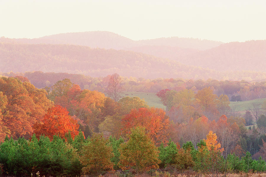 Autumn Forest In Virginia Photograph by Robert Llewellyn