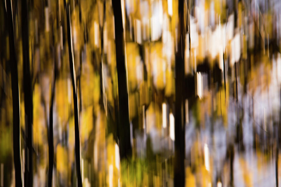 Autumn Forest by Yulia Kazansky