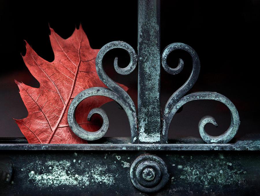 Autumn Gate by Josh Eral