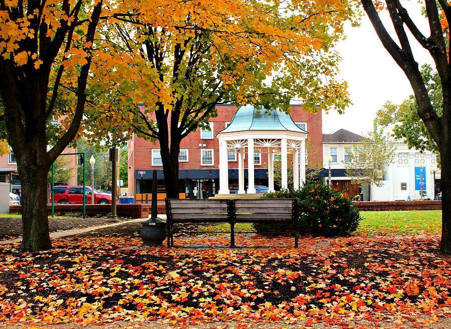 Autumn Photograph - Autumn Gatherings  by Candice Trimble