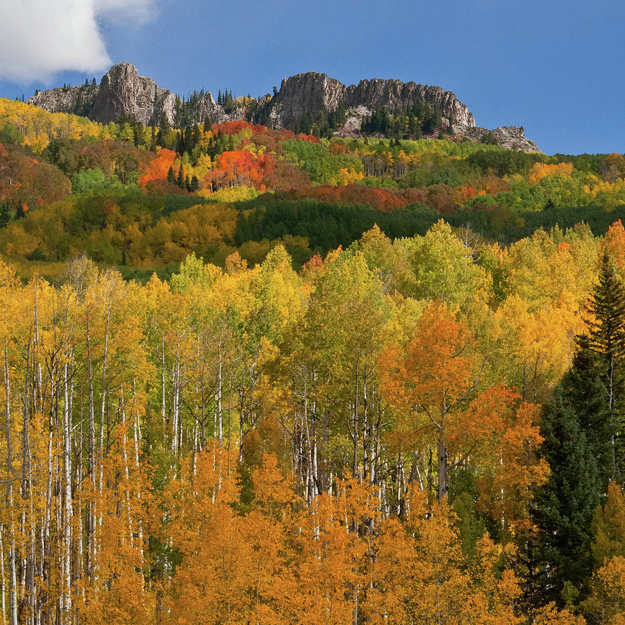 Autumn Glory at Kebler Pass by Cascade Colors